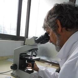 Professor Tobias Kollmann